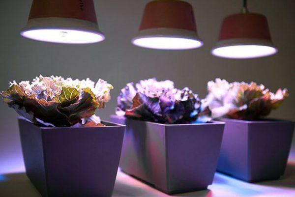 Подсветка вазонов лампами LED