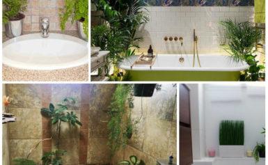 Можно ли вырастить в ванной что-то кроме плесени