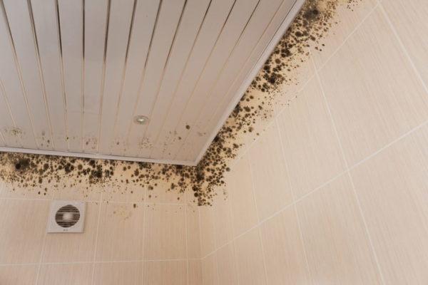 Распространение чёрной плесени под потолком