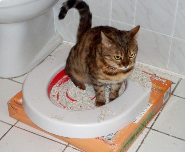 Кошачий запах в ванной